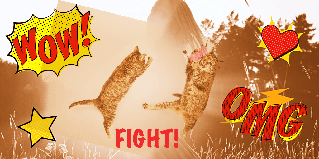 Banner-sun-cats-fight-OMG- Startups - Samuel Pavin blog
